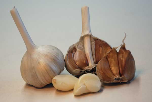 German Red hardneck garlic seed bulbs cloves peeled
