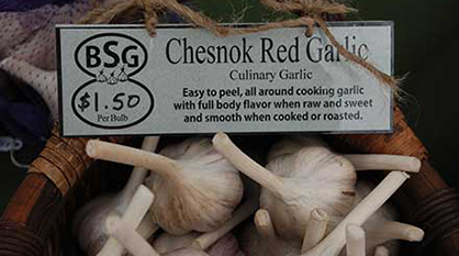 Chesnok garlic for sale in a basket