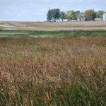 curved prairie road