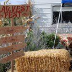 Festiveness at Big Stone Harvest Fest