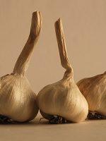 Display of Inchelium garlic bulbs