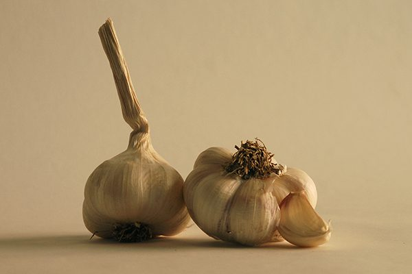 Two bulbs of belarus hardneck garlic