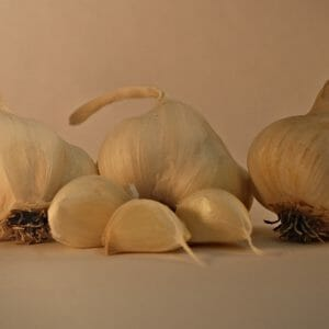 Inchelium seed garlic bulbs