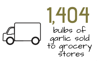 graphic stating 1404 bulbs of garlic sold to grocery stores